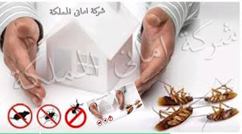 شركات مكافحة الحشرات فى الخرج