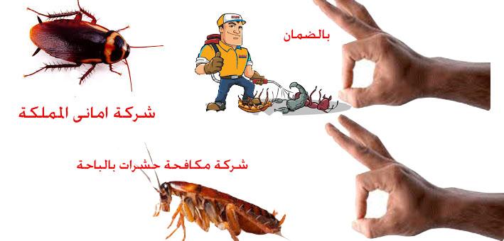 افضل شركة مكافحة حشرات بالباحة