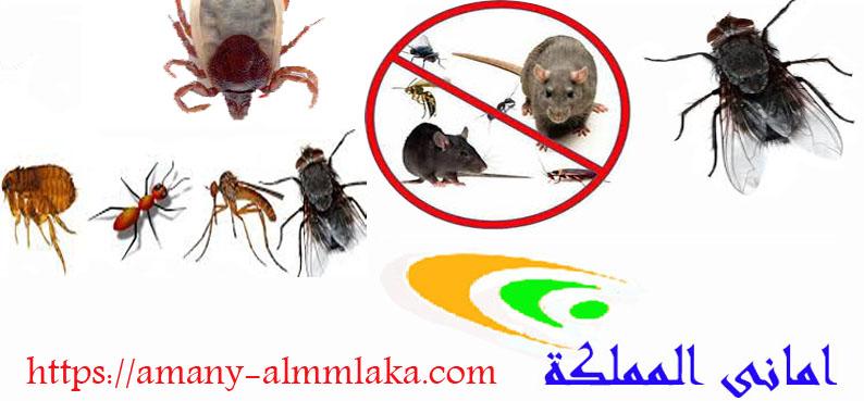 شركة مكافحة حشرات فى خميس مشيط