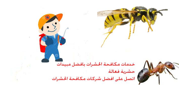 كيف تتخلص من الحشرات بافضل الطرق
