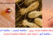 مكافحة النمل بينبع