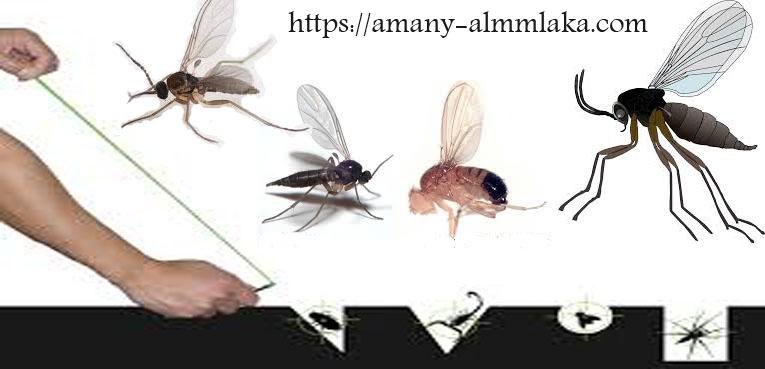 خدمات القضاء على الحشرات بمحايل