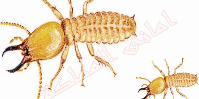 افضل شركة مكافحة النمل الابيض بحائل