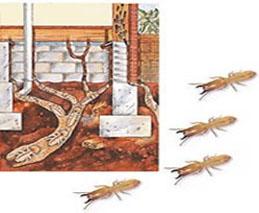 شركات مكافحة النمل بحائل