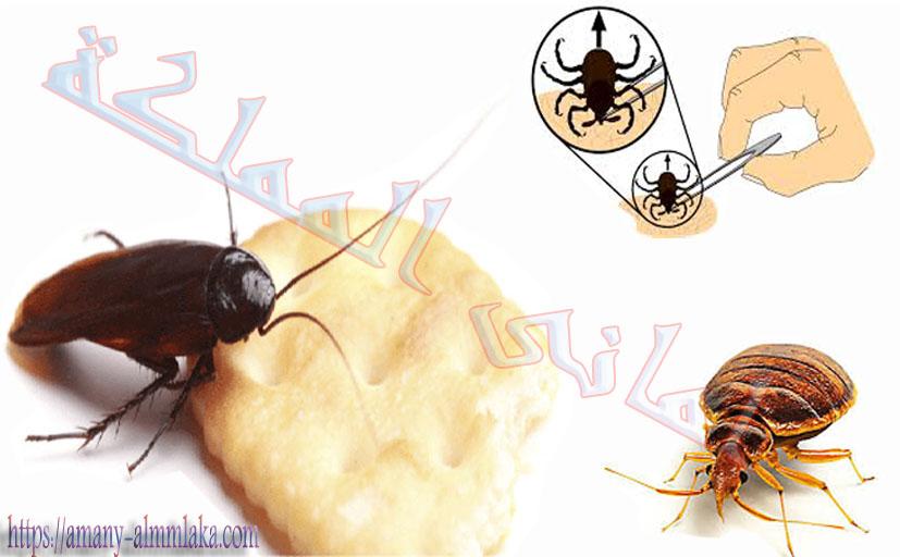 افضل شركة مكافحة حشرات بحائل