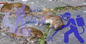 شركة مكافحة الفئران والقوارض بعرعر