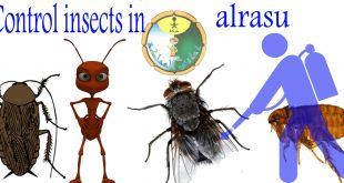 شركة مكافحة الحشرات فى الرس