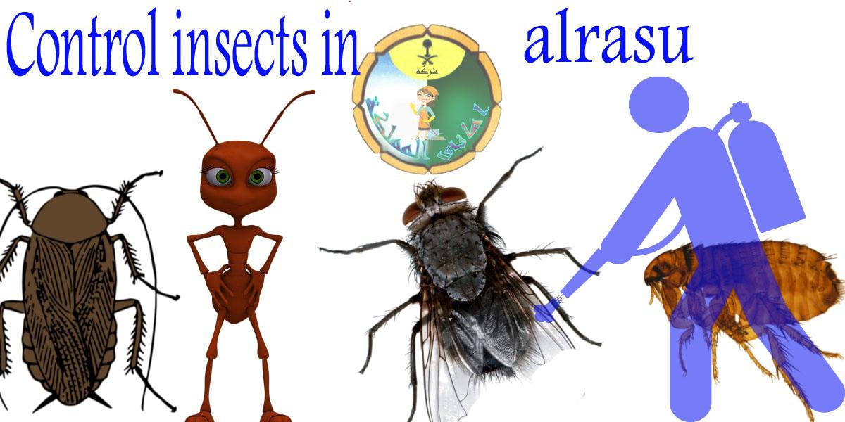 شركة مكافحة حشرات بالرس
