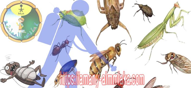 افضل شركة مكافحة حشرات بالقصيم