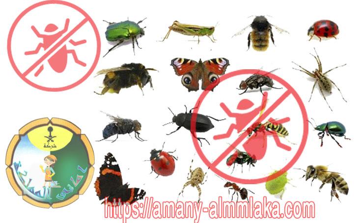 شركة مكافحة الحشرات فى القصيم