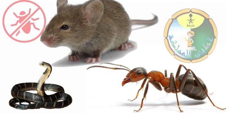 شركات مكافحة النمل والفئران بالخرج