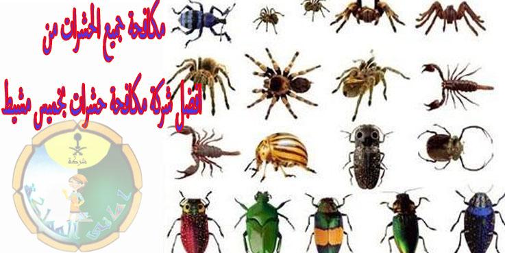 خدمات افضل شركة مكافحة حشرات بخميس مشيط