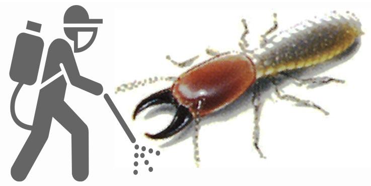 شركة مكافحة النمل الابيض بالخرج