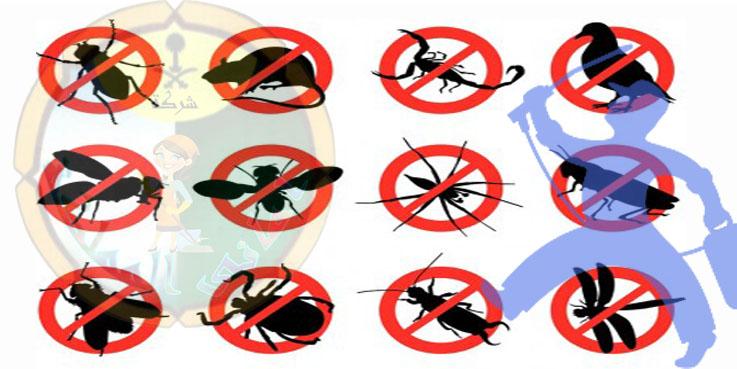 افضل شركة مكافحة حشرات بالبكيرية