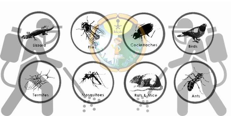 شركة مكافحة الحشرات بالبكيرية