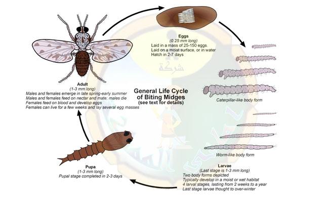 شركة مكافحة جميع انواع الحشرات بخميس مشيط