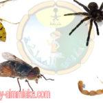 افضل ارقام شركات مكافحة الحشرات بالطائف