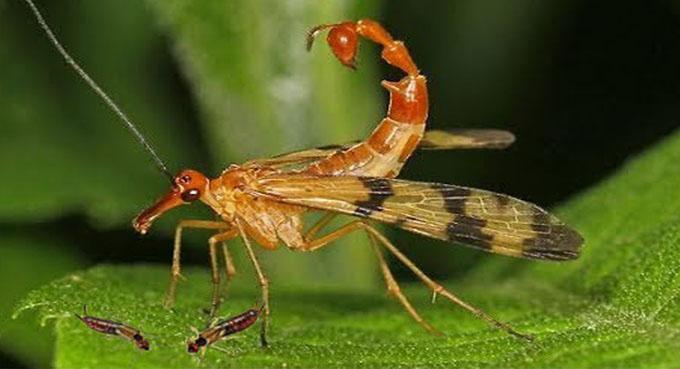 افضل خدمات مكافحة حشرات بالطائف