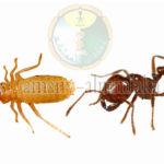 افضل شركة مكافحة النمل الابيض بالطائف