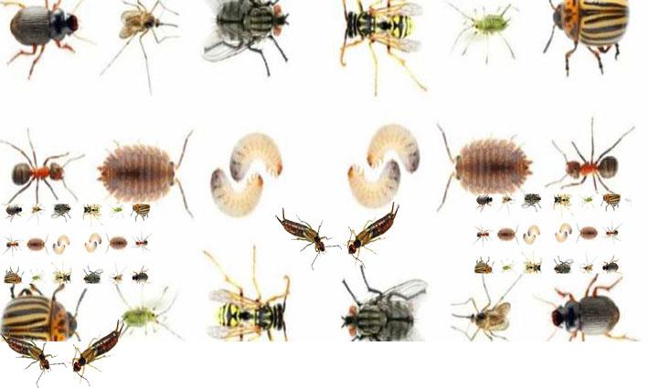 افضل شركة مكافحة حشرات بالطائف