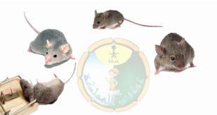 افضل مكافحة الفئران بالخرج