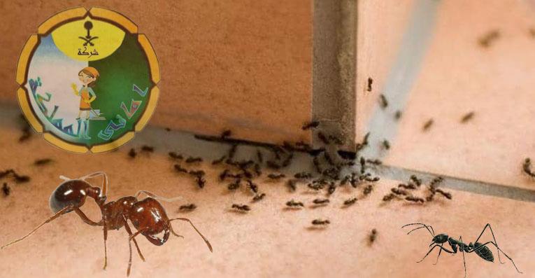 افضل شركة مكافحة النمل الابيض بالخرج